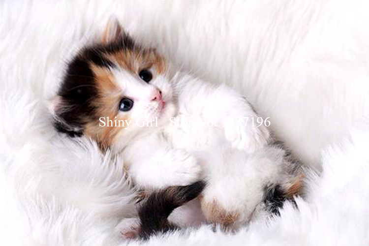 2015 5D DIY diamond diamond embroidery crafts embroidery stitch cute kitten painting bedroom living gifts and decorative painter(China (Mainland))