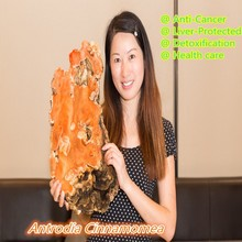 Antrodia Cinnamomea Extract 10:1 Powder,500g/bag,30% Polysaccharides 6% Triterpene,Anti-Cancer,Liver-Protected(China (Mainland))