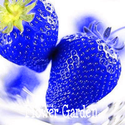 Best-Selling!50 PCS/Lot Blue Rare Fruits And Vegetables Strawberry Seeds Home Garden Fruits Potted Plant,#VYO7Y1(China (Mainland))