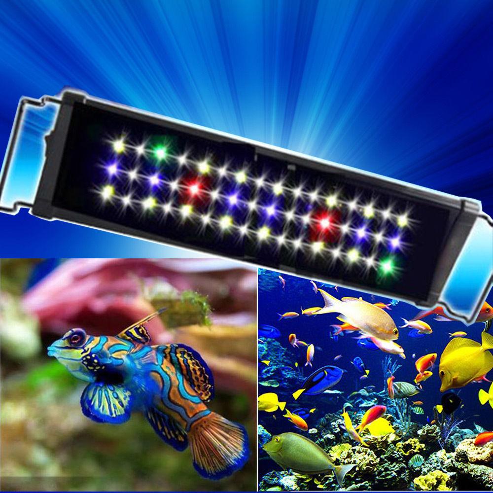 Cichlid s aquarium clairage achetez des lots petit prix for Aquarium petit prix