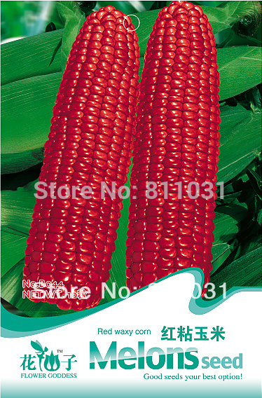 Hot selling 10pcs Red sticky corn seeds fruit seeds vegetable seeds bonsai plant DIY home garden free shipping(China (Mainland))