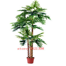 100% Genuine Rare 60pcs 10kinds mix Philodendron seeds, vine leaf, indoor plants Anti Radiation Absorb dust tree seeds(China (Mainland))