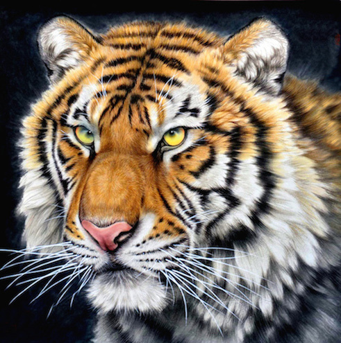LA017 printed oil painting on canvas wall art pictures for living room home decoration as unique gift head of kingly tiger(China (Mainland))