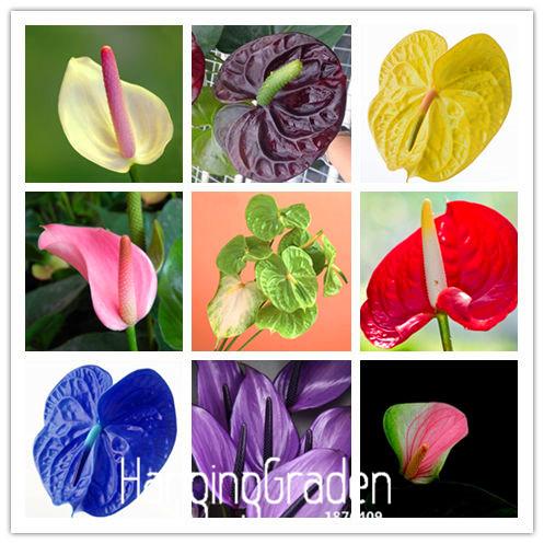 Loss Promotion!10Pieces/Pack Beautiful Rare flower seeds cactus Succulent seeds kaktus lithops hybrid bonsai plants,#YDOHAO