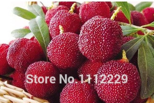 Yang mei tree seed 1PCS/lot(10 seeds), fruit plant ,Delicious, sweet,DIY home and garden(China (Mainland))