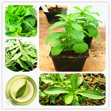 Stevia Seeds Stevia Herbs Seeds Green Herb Stevia Rebaudiana Semillas For Garden Planting Chinese Herb Seeds 200 Particles(China (Mainland))