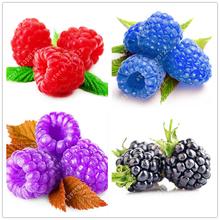 1000 шт. редкие малины семена органические семена фруктовые зеленый красный синий фиолетовый черный малины семена для дома сад растений легко расти(China (Mainland))