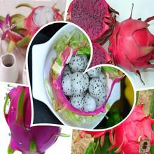 Желтый красный белый Pitaya Семена бонсай семена плодов 3 вида цветов семена дракон фрукты для выбора высокое качество сад Sementes Frutas 100(China)
