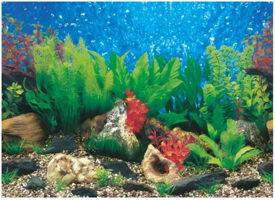 Aquarium plantes photos promotion achetez des aquarium for Promotion poisson aquarium