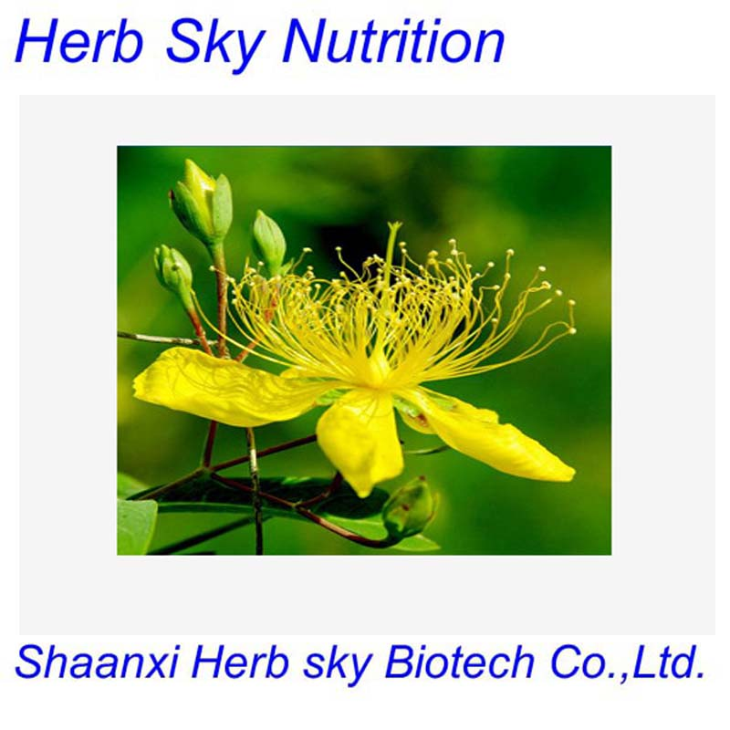 St.John's Wort Extract/ 0.3% ,1%Hypericins/3.0% Hyperforin/Hypericum perforatum extract 300g/lot