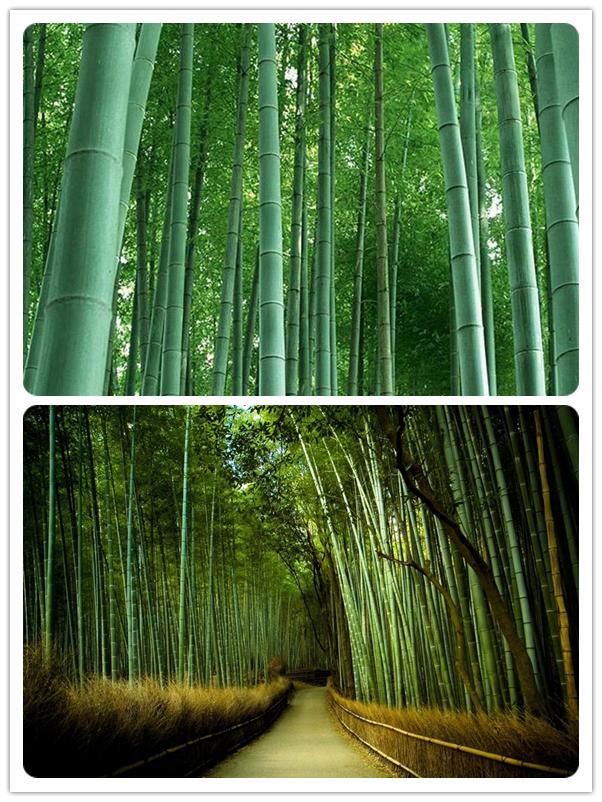 Acquista all 39 ingrosso online albero di protezione for Semi bambu gigante