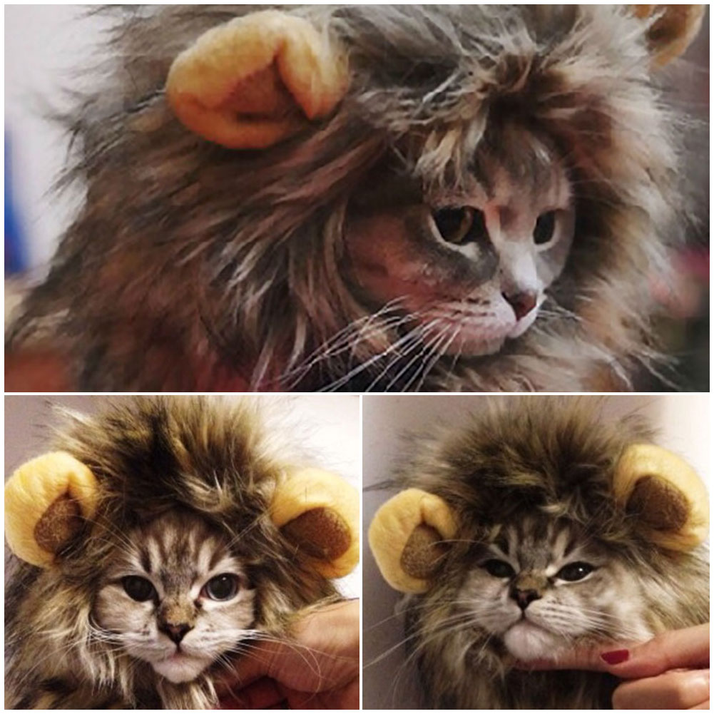 how to make a lion mane for cat