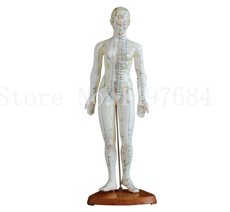Free Shipping Female 48CM human body acupuncture model.Human body whole body point model.English manual<br><br>Aliexpress