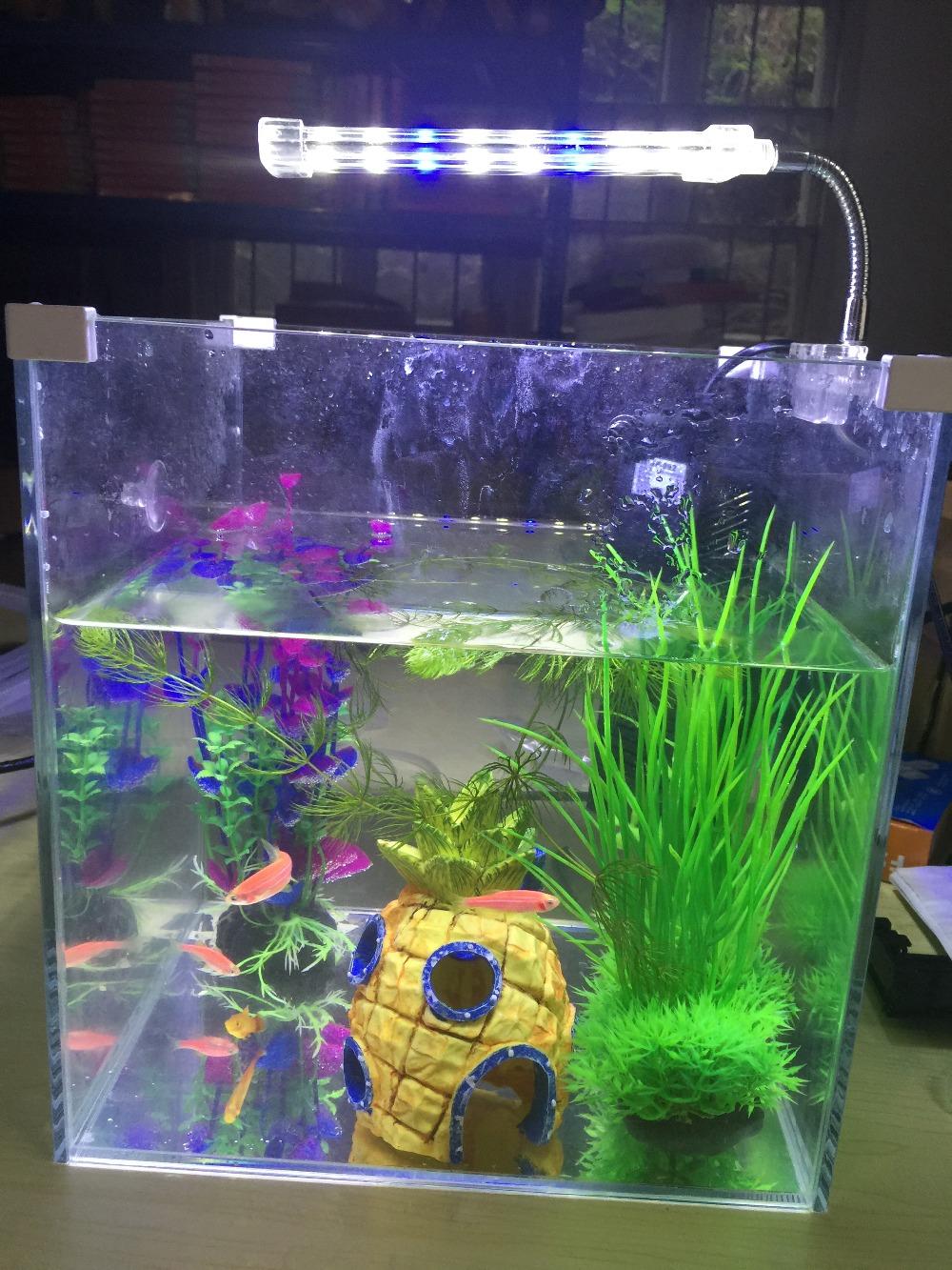 доставкой всей флюорисцентные лампы для аквариума проведение детского