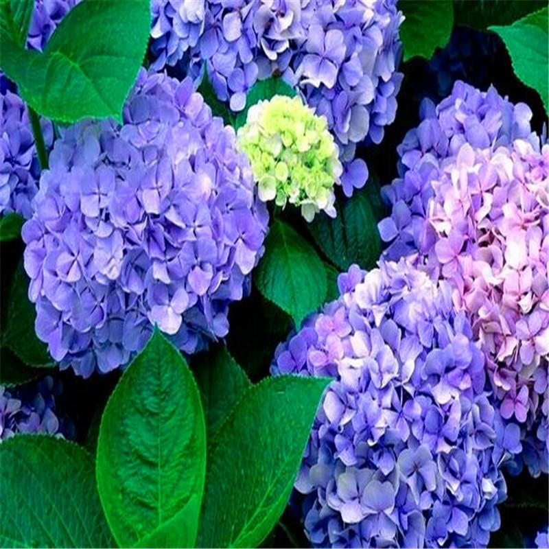 Fiore giardinaggio promozione fai spesa di articoli in for Vendita semi fiori
