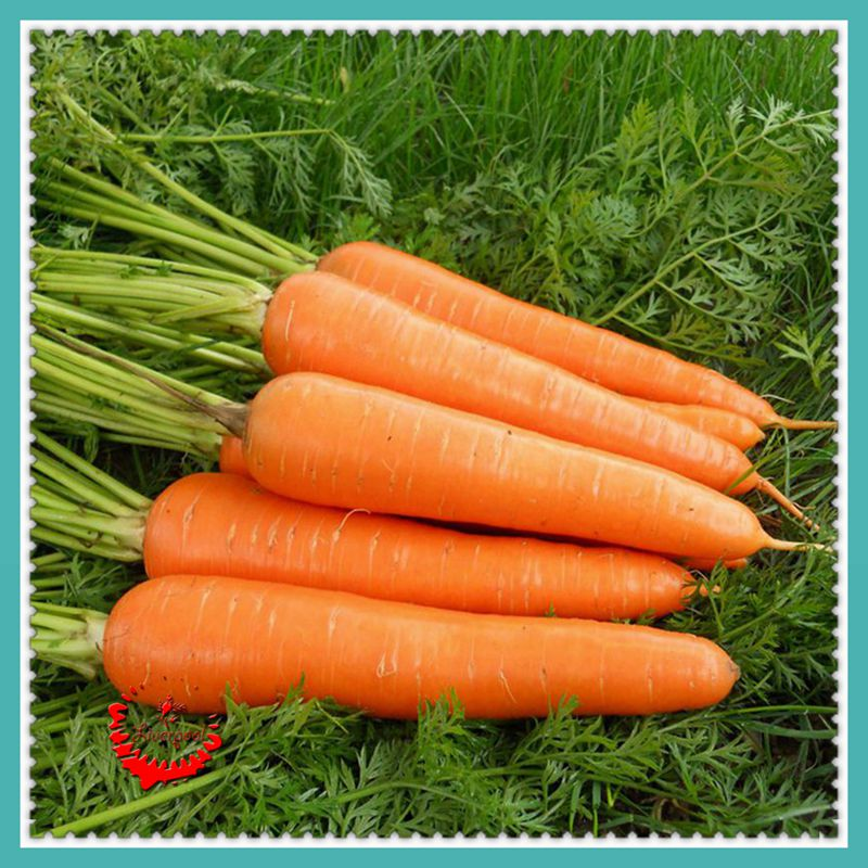 1 Package 400 Carrot Seeds Good Flavor Nice Color Tast High Germination(China (Mainland))