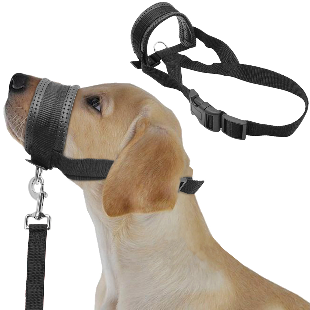 how to put a halter on a dog