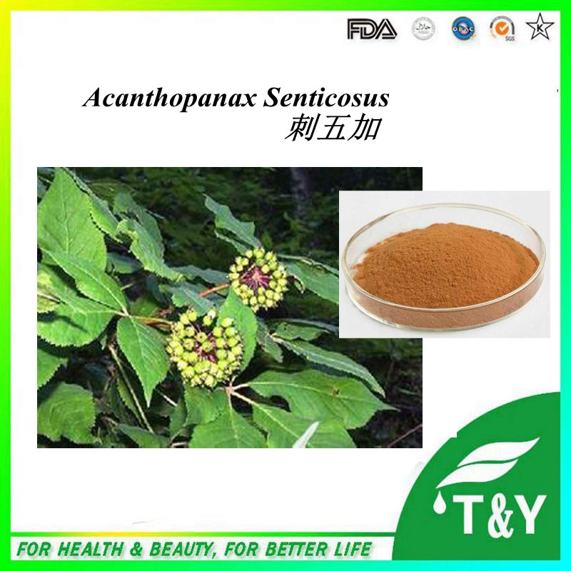 High quality Eleutherococcus Senticosus Extract / Siberian Ginseng Extract / Acanthopanax extract 700g/lot<br><br>Aliexpress
