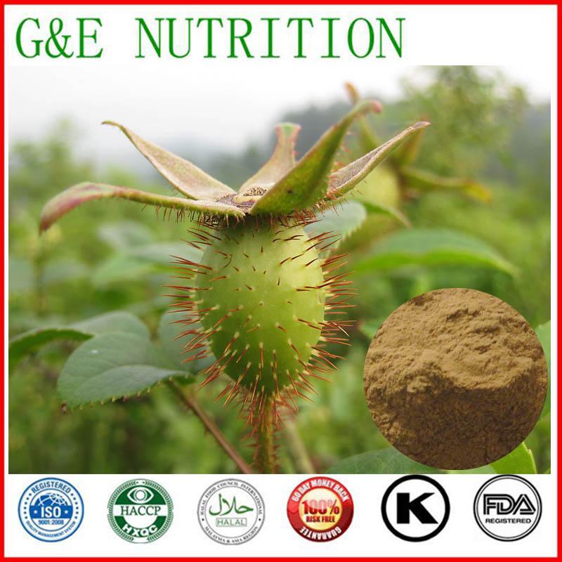 Supplying fructus rosae laevigatae extract powder 1000g