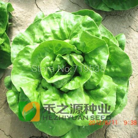 ... pumpkin seed brittle butter lettuce and pumpkin seed salad recipe
