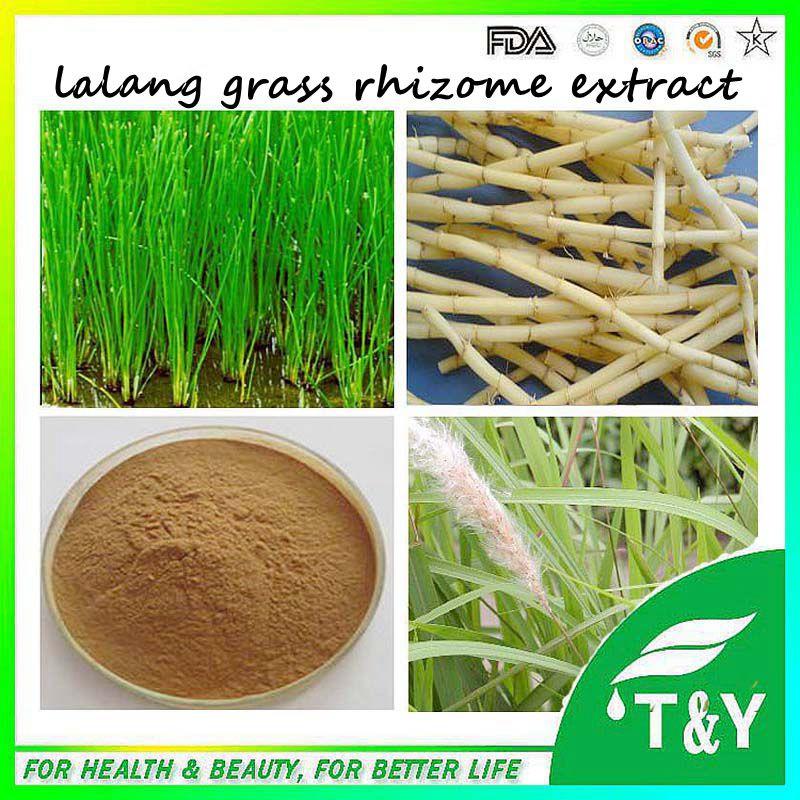 10:1,20:1 10% Lalang Grass Rhizome Extract