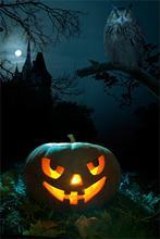 300cm*600cm(10x20ft) halloween backdrops photography Pumpkins Owl Castle Background Photo Studio ZJ