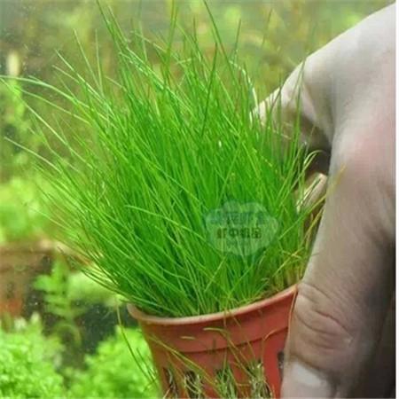 2015 Spring Bonsai aquarium grass Seeds 100pcs 10kinds mix grass Seeds Novel Blooming Plant for Courtyard Garden Free Shipping(China (Mainland))
