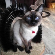 Pet Rub Hair Remover Scratching Cat Cat Toy Dog Brush Brush Grass Grab TV Pet Arch(China (Mainland))
