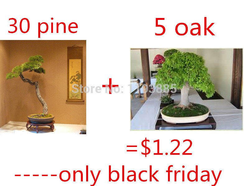 online kaufen gro handel eiche bonsai aus china eiche bonsai gro h ndler. Black Bedroom Furniture Sets. Home Design Ideas