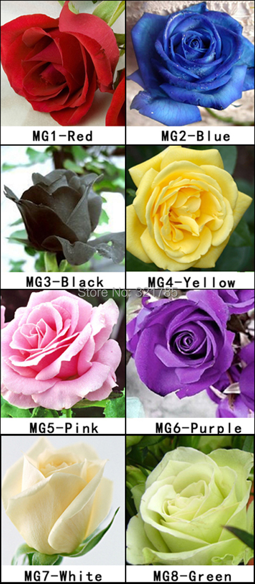 Free Shipping 8 Packs Of Rose Seeds /1 Pack 20 Seeds 8 Color Rose Total 160 Seeds