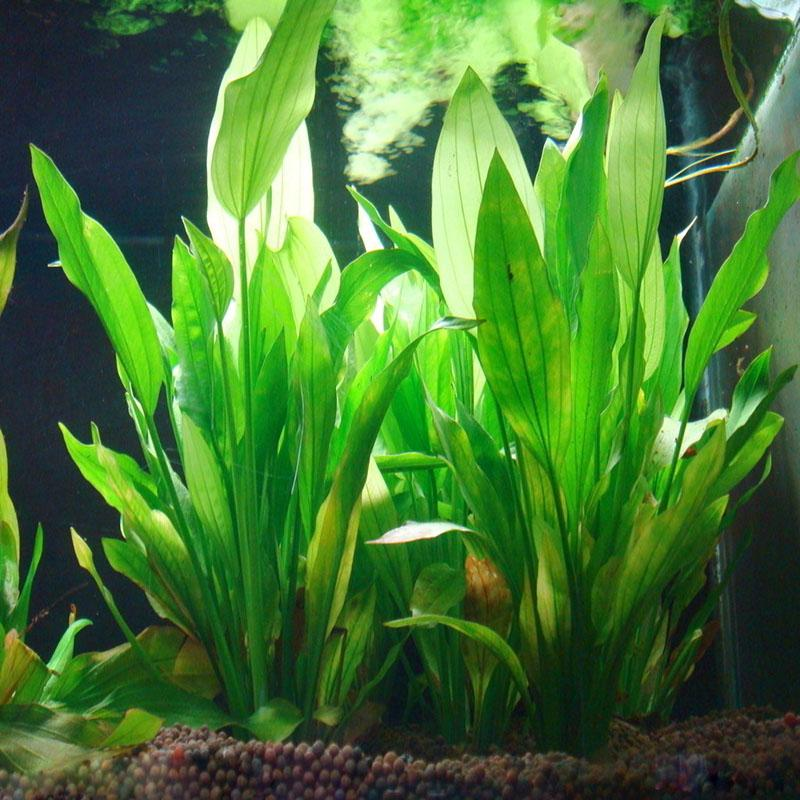 Buy simulation artificial grass aquarium for Artificial grass decoration