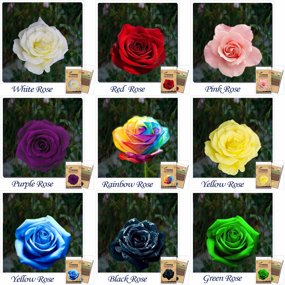 Popular order rainbow roses buy cheap order rainbow roses for Buy rainbow rose seeds