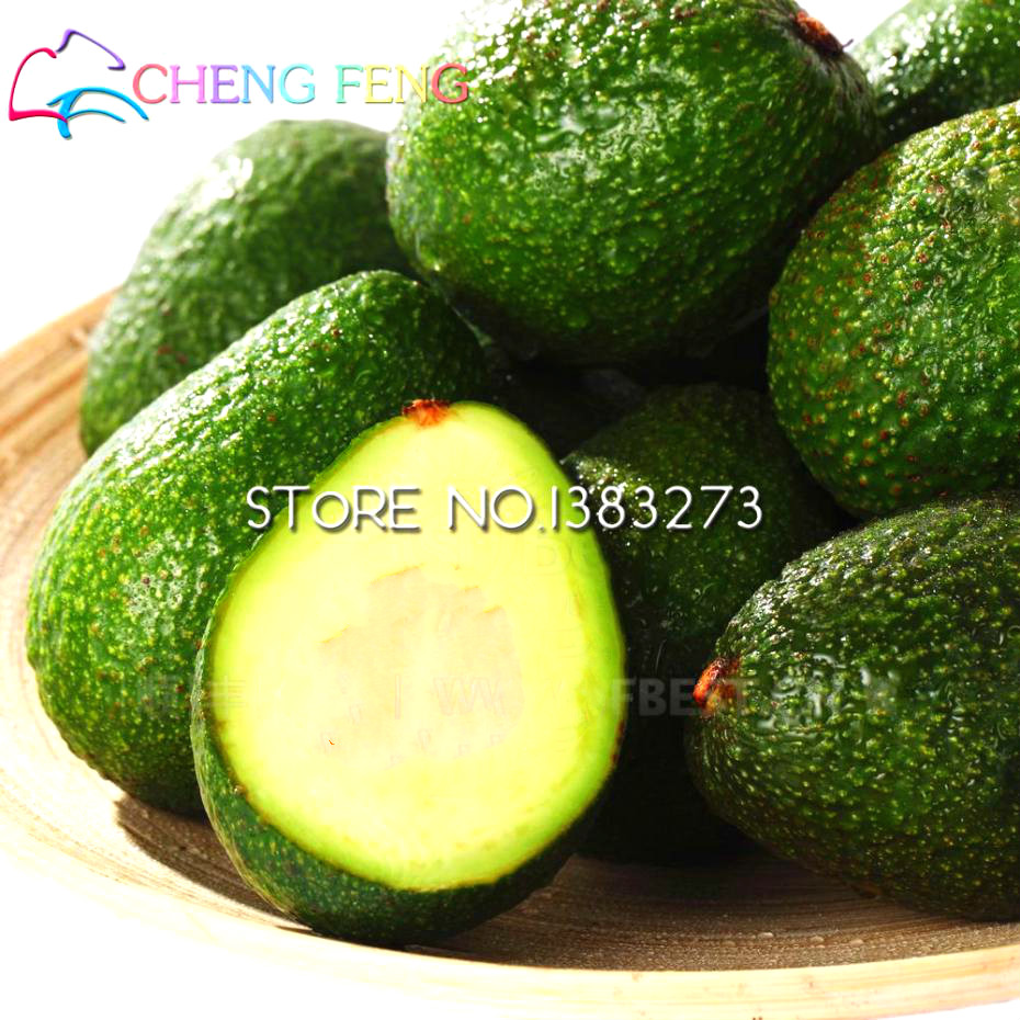 2016 Big Promotion 10pcs New Rare Green Avocado Seed Very Delicious Pear Fruit Seed Very Easy Grow For Home Garden Free Shipping(China (Mainland))