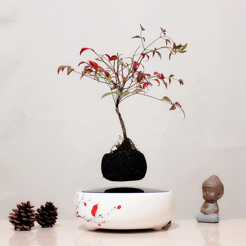 petits arbres pour pots promotion achetez des petits arbres pour pots promotionnels sur. Black Bedroom Furniture Sets. Home Design Ideas