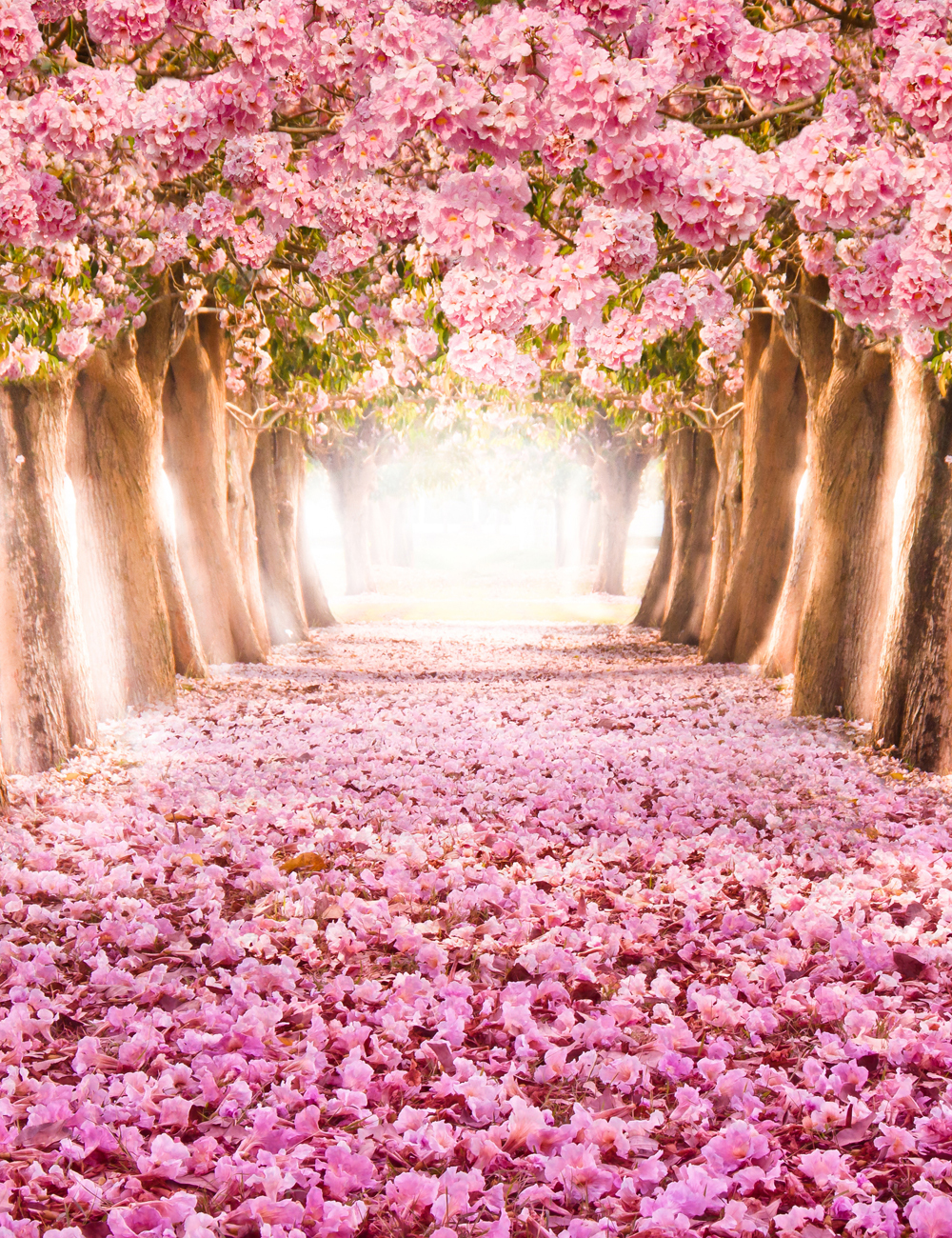 send rolled ! 5'X7' pink flower tree Backdrop - romantic tunnel, girls birthday - Printed Fabric Photography Background G0001