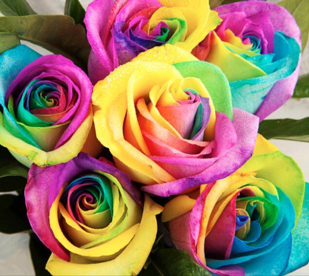 Hoge kwaliteit rainbow rose promotie winkel voor hoge for Rainbow colored rose