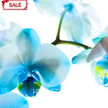 Hot Sale!9 Varieties Phalaenopsis Seeds Perennial Flowering Plants Potted Charming Flowers Seed,50 pcs/bag,#44LI74(China (Mainland))