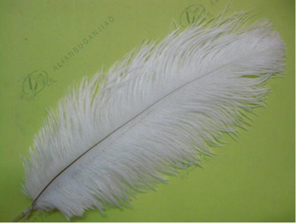"""50pcs 25~30cm/10-12"""" white ostrich feathers plumage flapper dresses for craft making bulk sale(China (Mainland))"""