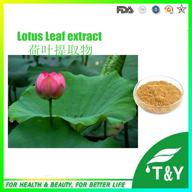 Herbal Lose Weight 100% natural Lotus Leaf Extract Powder/nuciferine Flavonoids low price lotus leaf extract 700g<br><br>Aliexpress