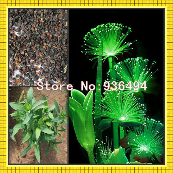 Карликовое дерево K1 100 PC , FGD98888501010 карликовое дерево flower seeds 100 multi butterfly