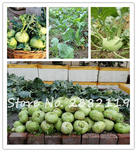 2017 Promotion Seeds Sementes Kohlrabi Seed -50seeds Fruit And Vegetable Seeds International Popular High-level Vegetables(China (Mainland))