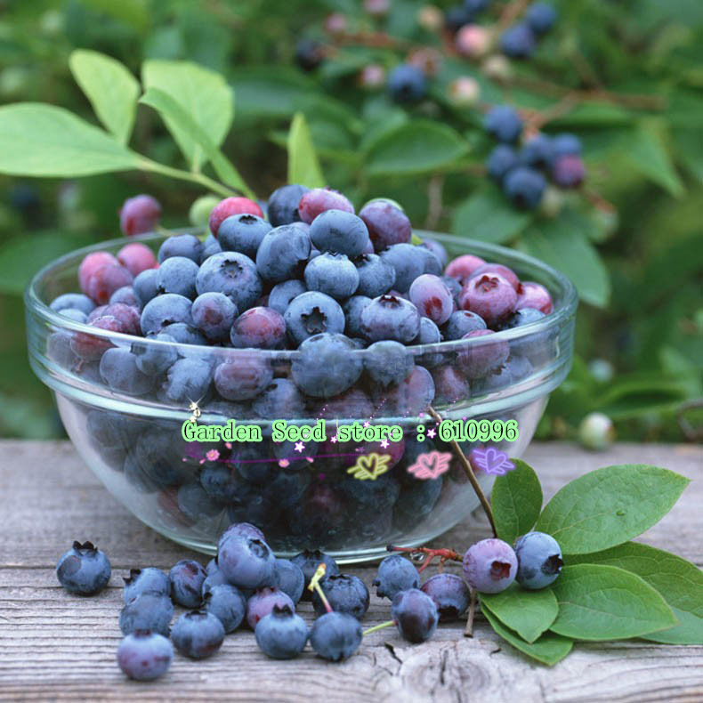 1 Packs, 30 Seeds/Pack, Induce Appetite Of Wild Blueberry Fresh Fruit Finest Quality, Best Prices Free Shipping(China (Mainland))