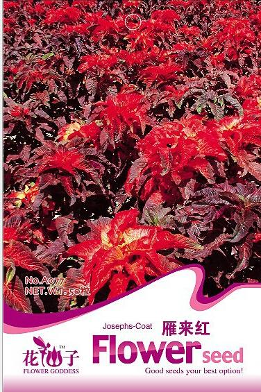 Special sales Amaranthus tricolor / josephs coat seeds,young at heart , Amaranthus tricolor,about 50 particles / pack(China (Mainland))