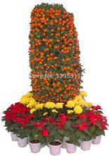 Buy 30 Pcs Mini Potted Fruit Seeds Bonsai Orange Seeds China, Quanzhou Climbing Orange Tree Seeds for $1.05 in AliExpress store