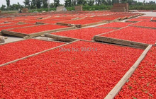 Famous original place sell best goji berry The king of Chinese wolfberry medlar herbal tea Health