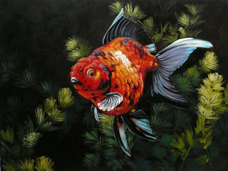Goldfish Animal Handmade Impression landscape canvas wall art blue items Impression landscape bed room background(China (Mainland))