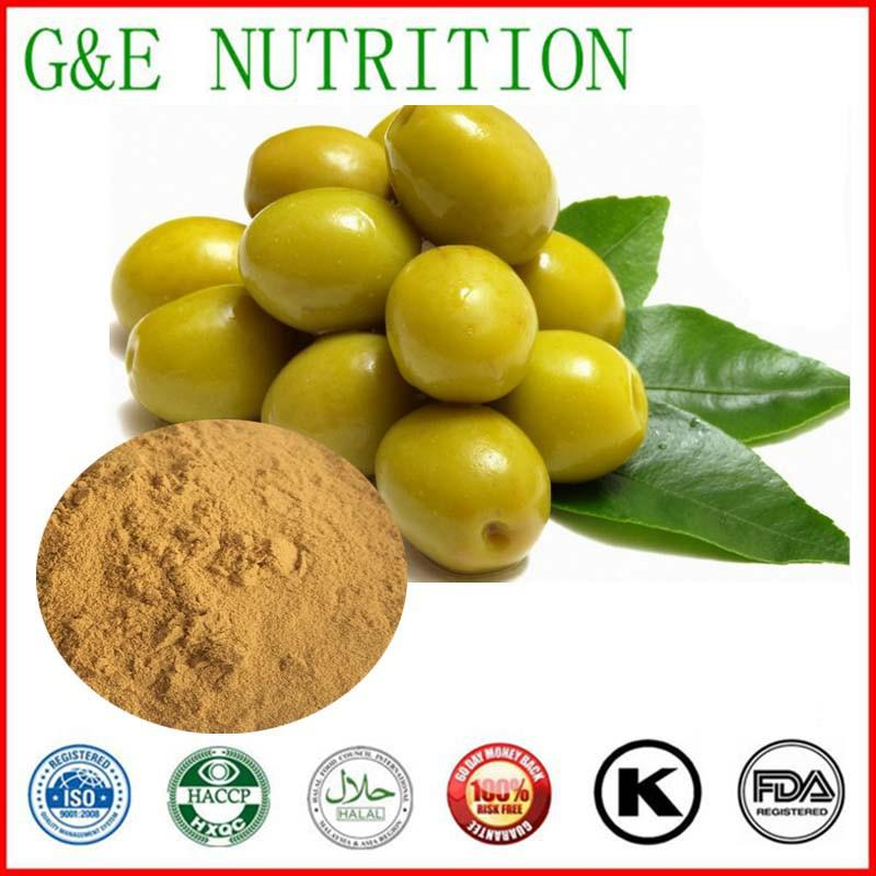 GMP Factory suplly natural olive leaf extract  powder in bulk    10:1   1000g