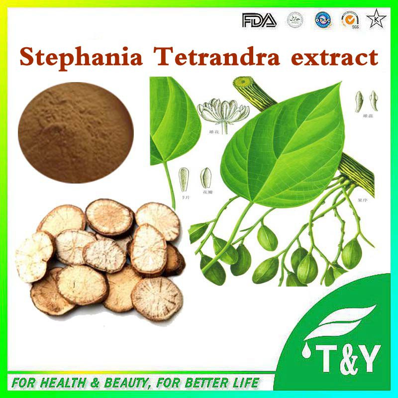 manufacture direct supply high quality stephania tetrandra extract(P)<br><br>Aliexpress