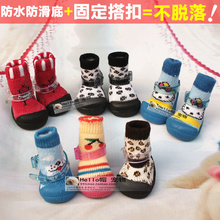 chihuahua pet promotion