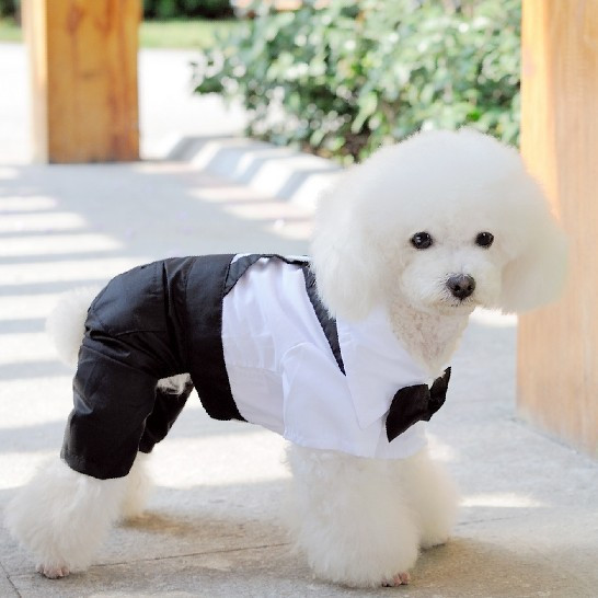 Black & white dog's tuxedo